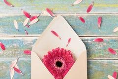 与唯一大丁草花的礼物或礼物消息概念在卡拉服特信封 贺卡在母亲或妇女天 顶视图 库存图片