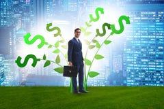 与商人的金钱树概念在增长的赢利 免版税库存照片