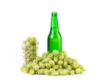 与啤酒杯和蛇麻草的啤酒 免版税图库摄影