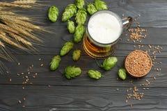 与啤酒花球果树和麦子耳朵的玻璃啤酒在黑暗的木背景 啤酒啤酒厂概念 背景啤酒包含梯度滤网 顶视图 免版税库存照片