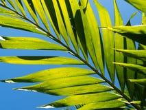 与喂光树荫和阴影的棕榈叶特写镜头 库存图片