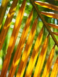 与喂光树荫和阴影的棕榈叶特写镜头 图库摄影