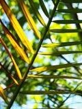 与喂光树荫和阴影的棕榈叶特写镜头 免版税图库摄影