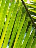 与喂光树荫和阴影的棕榈叶特写镜头 免版税库存图片
