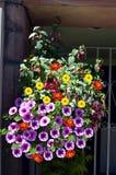 与喇叭花、大丽花和倒挂金钟的垂悬的篮子开花 库存照片