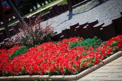 与喇叭花的花床 库存图片