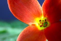 与四个瓣的一朵花 库存图片