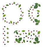 与四个莓果样式的了不起的集合 免版税库存照片