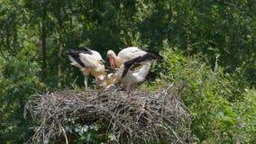 与四只鹳的巢 免版税库存照片