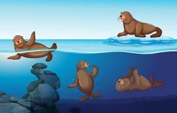 与四封印游泳的海洋场面 库存例证