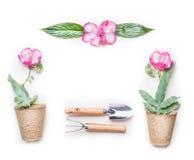 与园艺工具和花的从事园艺的概念框架在白色背景的罐 免版税图库摄影