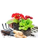 与园艺工具的红色花 免版税库存图片