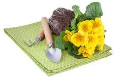 与园艺工具的黄色花 库存图片