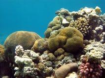 与困难和石珊瑚的珊瑚礁在botto 库存照片