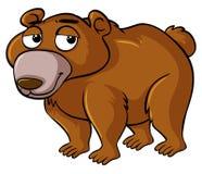 与困面孔的北美灰熊 皇族释放例证