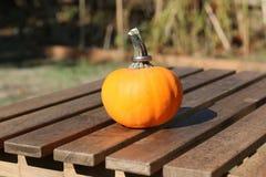 与圆环的秋天微型南瓜 库存照片