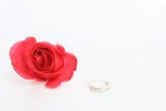 与圆环的红色玫瑰在白色背景 库存图片
