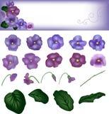 与圆的叶子的紫罗兰色花,与设计的一张卡片从花 库存图片