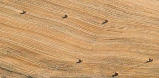 与圆的干草捆的亩茬地 库存图片