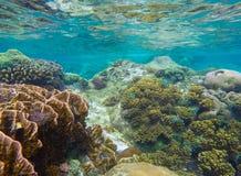 与圆的珊瑚和石头的水下的风景在黄色和棕色色板显示 免版税库存图片