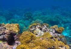 与圆的珊瑚和石头的水下的风景在黄色和棕色色板显示 库存图片