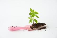 与土壤和小桃红色铁锹的一点树 免版税库存照片