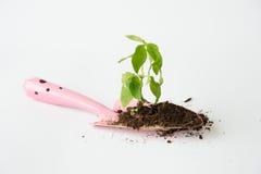 与土壤和小桃红色铁锹的一点树 免版税库存图片