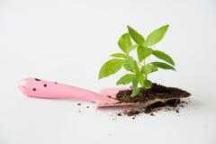 与土壤和小桃红色铁锹的一点树 库存照片