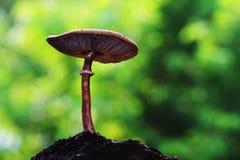 与土壤的蘑菇 库存图片