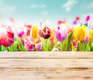 与土气木板的五颜六色的郁金香 免版税库存照片