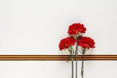 与圣乔治丝带的红色康乃馨在白色背景 d 免版税库存图片