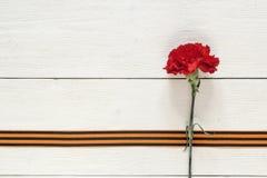 与圣乔治丝带的红色康乃馨在白色背景 d 免版税库存照片