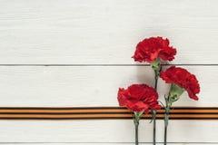 与圣乔治丝带的红色康乃馨在白色背景 d 库存图片