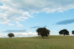 与圣栎的美好的风景 免版税库存照片