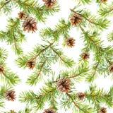 与圣诞树分支的新年无缝的样式  库存照片