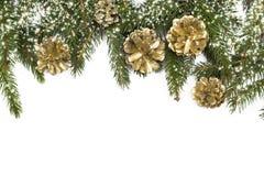 与圣诞树和锥体的白色背景 库存图片