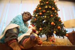 与圣诞树的猴子 免版税库存照片