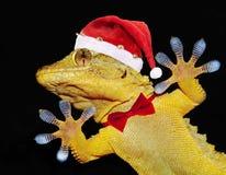 与圣诞老人帽子和招呼大家的蝶形领结的壁虎 免版税图库摄影