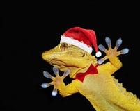 与圣诞老人帽子和招呼大家的蝶形领结的壁虎 免版税库存图片