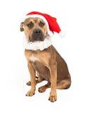 与圣诞老人帽子和衣领的美洲叭喇十字架 库存图片