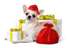 与圣诞老人帽子和黄色礼物盒,圣诞节概念的狗 免版税库存照片