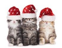 与圣诞老人帽子的三只逗人喜爱的家猫 免版税库存图片