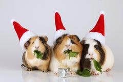 与圣诞老人帽子的三间试验品 免版税图库摄影