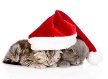 与圣诞老人帽子的两只睡觉小猫 隔绝在白色backgroun 免版税库存图片