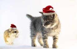 与圣诞老人帽子的仓鼠祈祷对逗人喜爱的灰色猫的 库存照片