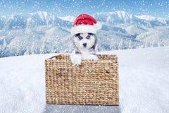 与圣诞老人帽子的小的多壳的狗在山 免版税图库摄影