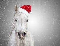 与圣诞老人帽子的白色圣诞节马在灰色背景降雪 免版税库存图片