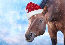 与圣诞老人帽子的红色马在霜背景 免版税库存图片