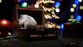 与圣诞老人帽子的逗人喜爱的仓鼠在与圣诞灯的bsckground 影视素材
