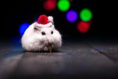 与圣诞老人帽子的逗人喜爱的仓鼠在与圣诞灯的bsckground 免版税库存照片